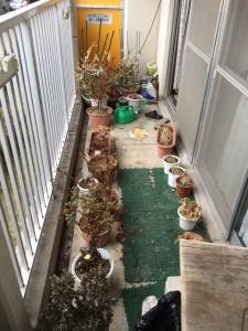 千種区でベランダの植木を不用品回収しました!