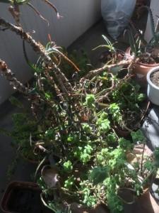名古屋市 中区 植木不用品回収 激安!